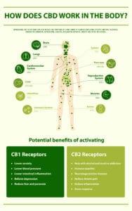 Wat is het endocannabinoïden systeem